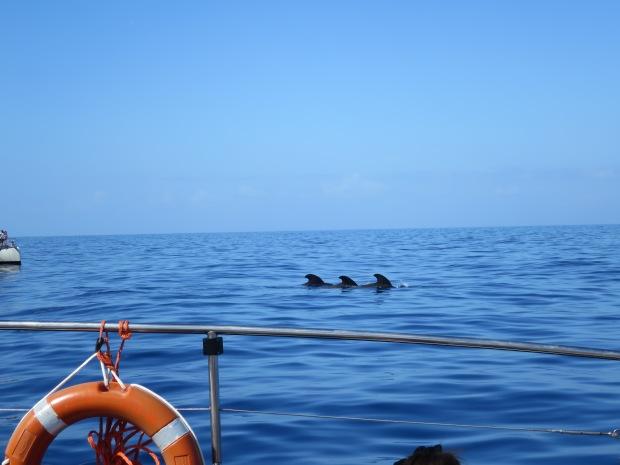 Whales Playa de las Americas Tenerife